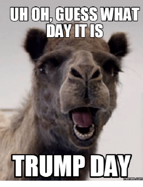Guess The Memes Answers Roblox: UHOH GUESS WHAT DAY ITIS TRUMP DAY Memescom