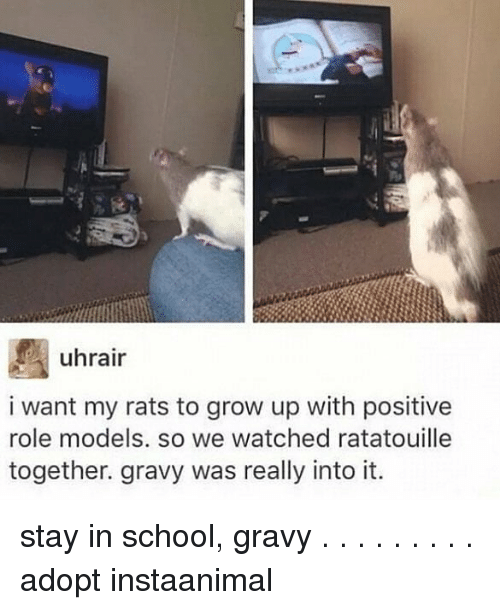 Memes, School, and Ratatouille: uhrair  i want my rats to grow up with positive  role models. so we watched ratatouille  together. gravy was really into it. stay in school, gravy . . . . . . . . . adopt instaanimal