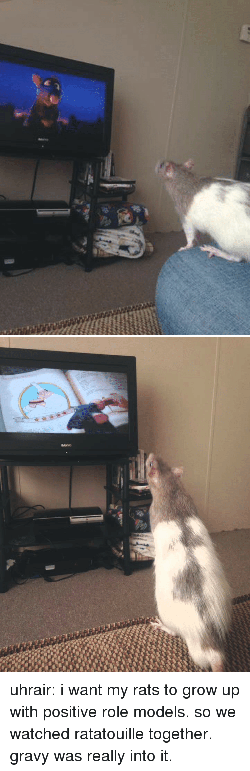 Tumblr, Ratatouille, and Blog: uhrair:  i want my rats to grow up with positive role models. so we watched ratatouille together. gravy was really into it.