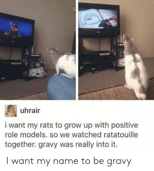 Ratatouille, Models, and Role Models: uhrair  i want my rats to grow up with positive  role models. so we watched ratatouille  together. gravy was really into it. I want my name to be gravy