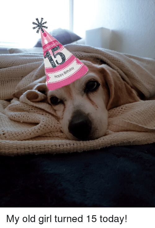 Birthday, Happy Birthday, and Girl: uinccaiet  Happy Birthday My old girl turned 15 today!