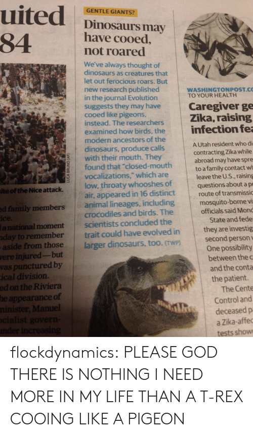 """Family, God, and Life: uited  84  GENTLE GIANTS?  Dinosaurs may  have cooed,  not roared  We've always thought of  dinosaurs as creatures that  let out ferocious roars. But  new research published  in the journal Evolution  suggests they may have  cooed like pigeons,  instead. The researchers  WASHINGTONPOST.C  TO YOUR HEALTH  Caregiver ge  Zika, raising  infection fea  examined how birds, the  modern ancestors of the  AUtah resident who di  contracting Zika while  abroad may have spre  to a family contact wh  leave the U.S., raising  questions about a pe  route of transmissic  dinosaurs, produce calls  with their mouth. They  found that """"closed-mouth  vocalizations,"""" which are  low, throaty whooshes of  air, appeared in 16 distinct  animal lineages, including  crocodiles and birds. The  scientists concluded the  trait could have evolved in  larger dinosaurs, too. TwP)  site of the Nice attack.  mosquito-borne vi  officials said Mond  ed family members  ice.  lanational moment  nday to remember  aside from those  were injured-but  vas punctured by  ical division.  ed on the Riviera  he appearance of  minister, Manuel  ocialist govern-  nder increasing  State and fede  they are investig  second person v  One possibility  between the c  and the conta  the patient.  The Cente  Control and  deceased p  a Zika-affec  tests show  LUCA BRUNO (AP) flockdynamics:  PLEASE GOD THERE IS NOTHING I NEED MORE IN MY LIFE THAN A T-REX COOING LIKE A PIGEON"""