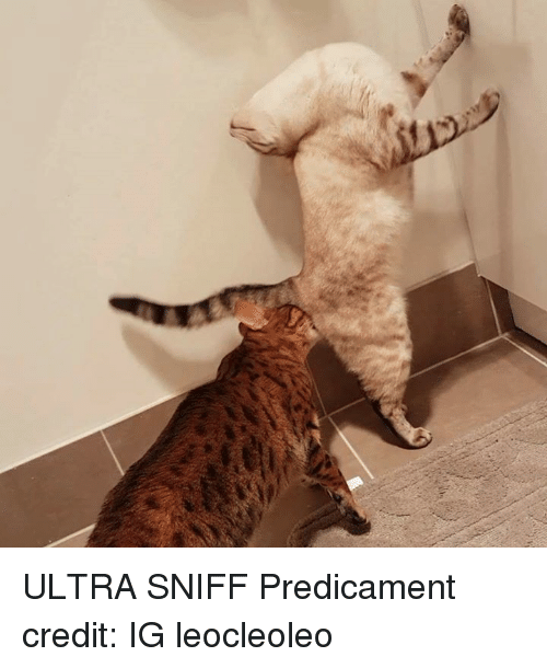 Credited, Predicament, and  Sniff: ULTRA SNIFF  Predicament credit: IG leocleoleo