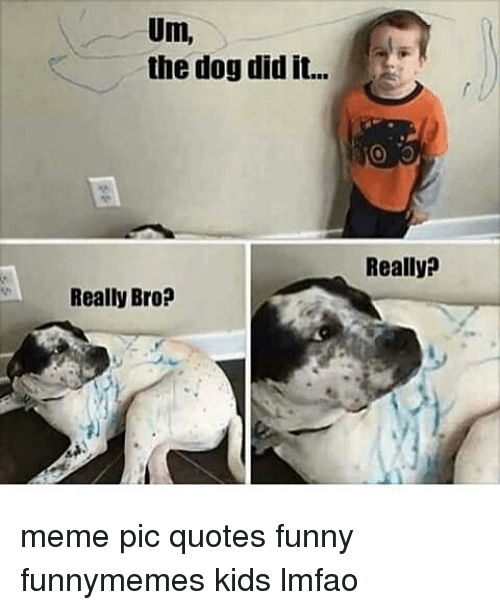 um the dog did it really bro really meme pic 9470038 ✅ 25 best memes about really meme really memes,Really Funny Memes