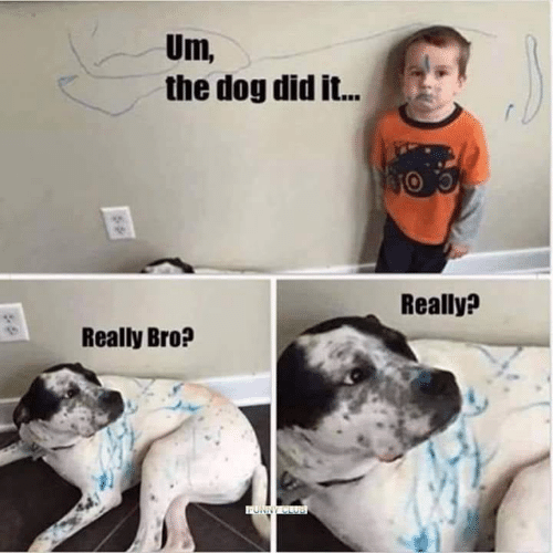 Memes, 🤖, and Dog: Um,  the dog did it...  Really?  Really Bro?