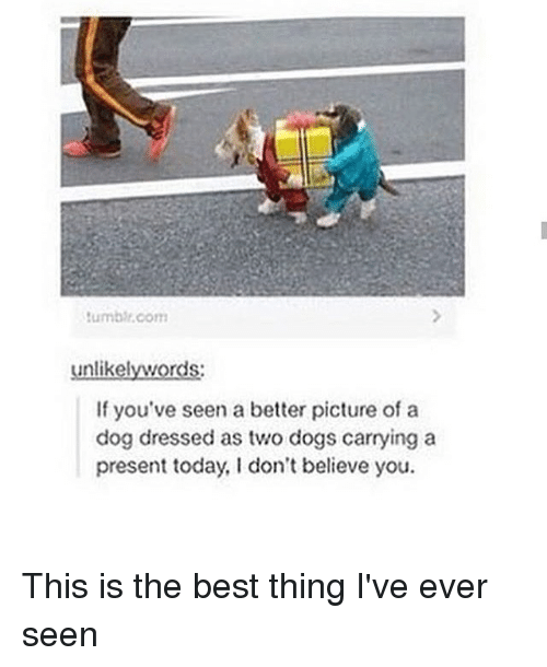 Dogs, Memes, and Best: umbir.com  unlikelywords  If you've seen a better picture of a  dog dressed as two dogs carrying a  present today, I don't believe you. This is the best thing I've ever seen
