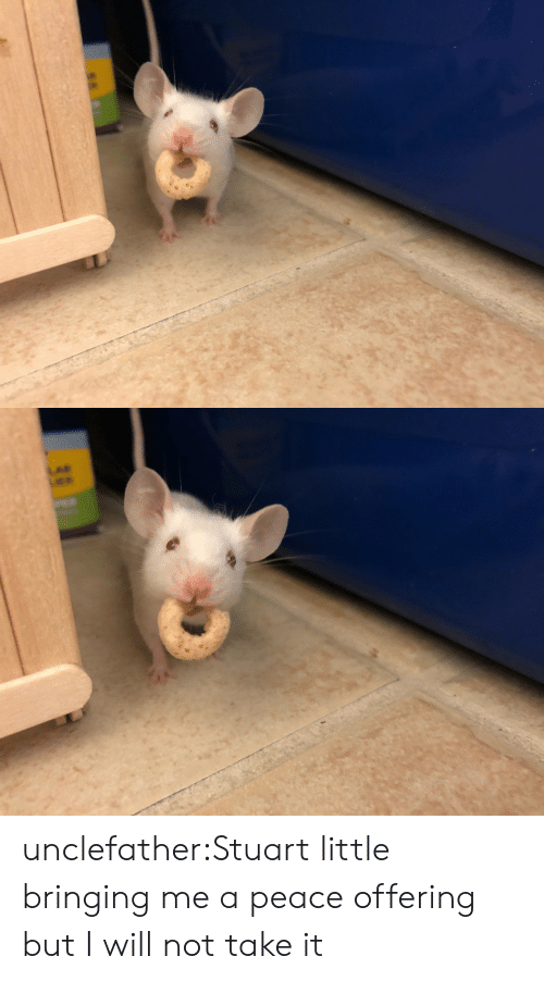 Tumblr, Stuart Little, and Blog: unclefather:Stuart little bringing me a peace offering but I will not take it