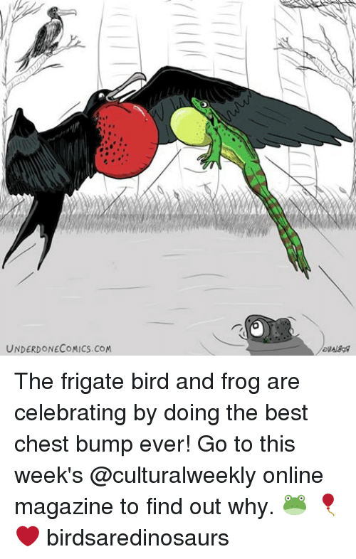 Memes, 🤖, and Frog: UNDERDONECOMICS. CoM The frigate bird and frog are celebrating by doing the best chest bump ever! Go to this week's @culturalweekly online magazine to find out why. 🐸 🎈 ❤️ birdsaredinosaurs