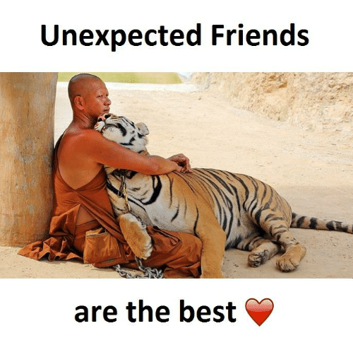Friends, Best, and Bests: Unexpected Friends  are the best
