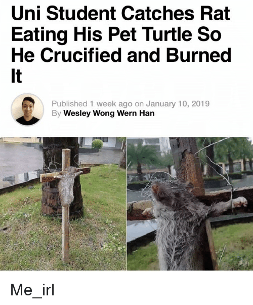 Uni Student Catches Rat Eating His Pet Turtle So He Crucified And Burned It Published 1 Week Ago On January 10 2019 Wesley Wong Wern Han Turtle Meme On Me Me