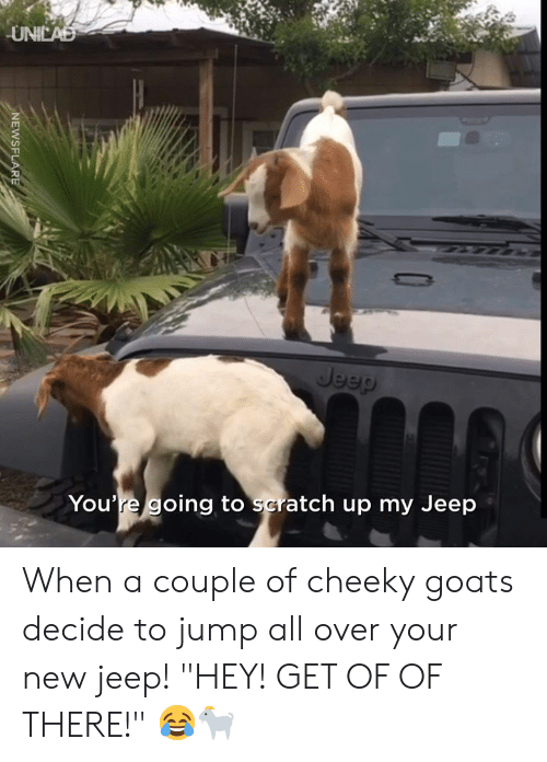 """Dank, Jeep, and Scratch: UNICAD  Jeep  You're going to scratch up my Jeep  NEWSFLARE When a couple of cheeky goats decide to jump all over your new jeep! """"HEY! GET OF OF THERE!"""" 😂🐐"""