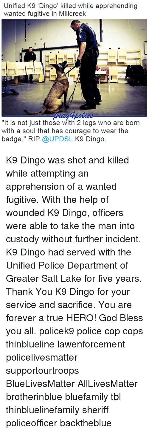 """All Lives Matter, Blessed, and God: Unified K9 'Dingo' killed while apprehending  wanted fugitive in Millcreek  """"It is not just those With 2 legs who are born  with a soul that has courage to wear the  badge."""" RIP @UPDSL K9 Dingo. K9 Dingo was shot and killed while attempting an apprehension of a wanted fugitive. With the help of wounded K9 Dingo, officers were able to take the man into custody without further incident. K9 Dingo had served with the Unified Police Department of Greater Salt Lake for five years. Thank You K9 Dingo for your service and sacrifice. You are forever a true HERO! God Bless you all. policek9 police cop cops thinblueline lawenforcement policelivesmatter supportourtroops BlueLivesMatter AllLivesMatter brotherinblue bluefamily tbl thinbluelinefamily sheriff policeofficer backtheblue"""