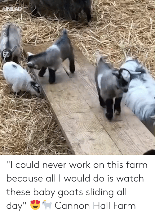 "Dank, Work, and Watch: UNILAD  CANNONHALLFAR ""I could never work on this farm because all I would do is watch these baby goats sliding all day"" 😍🐐  Cannon Hall Farm"