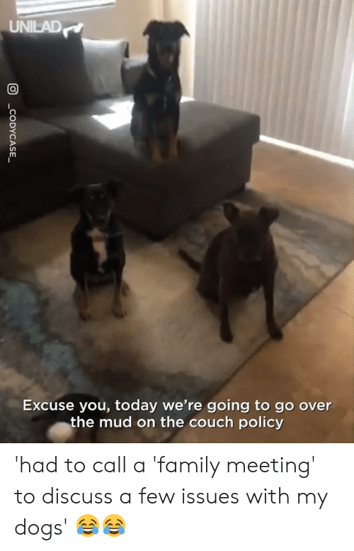 Dank, Dogs, and Family: UNILAD  Excuse you, today we're going to go over  the mud on the couch policy 'had to call a 'family meeting' to discuss a few issues with my dogs' 😂😂