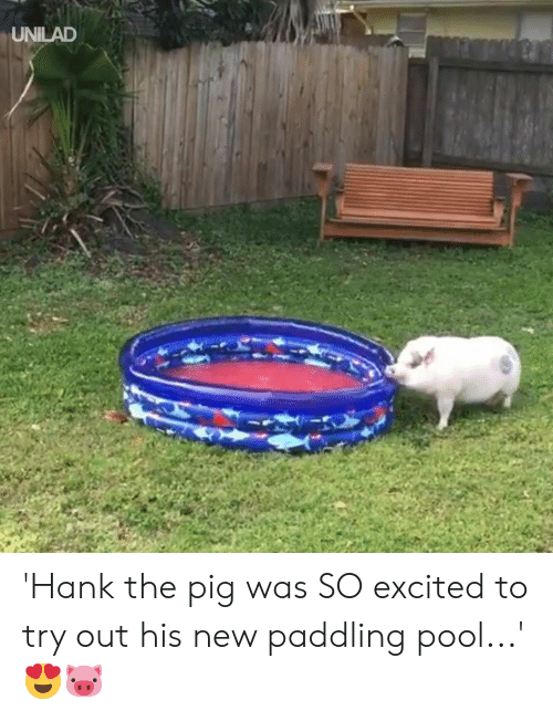 Dank, Pool, and 🤖: UNILAD 'Hank the pig was SO excited to try out his new paddling pool...' 😍🐷