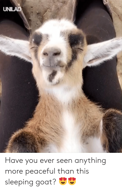 Dank, Goat, and Sleeping: UNILAD Have you ever seen anything more peaceful than this sleeping goat? 😍😍