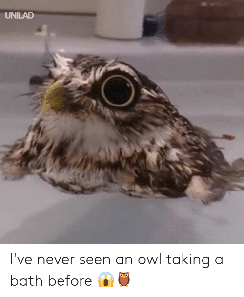 Dank, Never, and 🤖: UNILAD I've never seen an owl taking a bath before 😱🦉