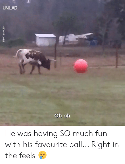 Dank, 🤖, and Fun: UNILAD  Oh oh He was having SO much fun with his favourite ball... Right in the feels 😢