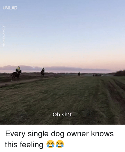 Dank, Single, and 🤖: UNILAD  Oh sh*t Every single dog owner knows this feeling 😂😂