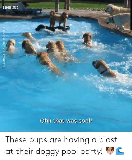 Dank, Party, and Cool: UNILAD  Ohh that was cool!  LUCKY PUPPY VIA STORYFUL These pups are having a blast at their doggy pool party! 🐶🌊