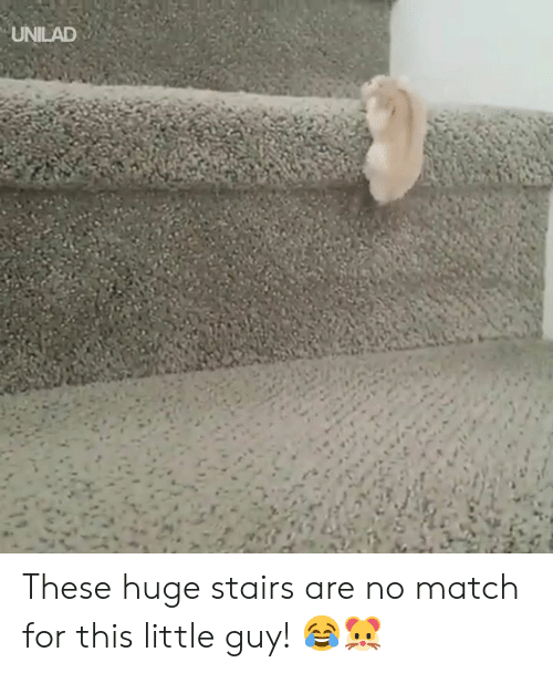 Dank, Match, and 🤖: UNILAD These huge stairs are no match for this little guy! 😂🐹