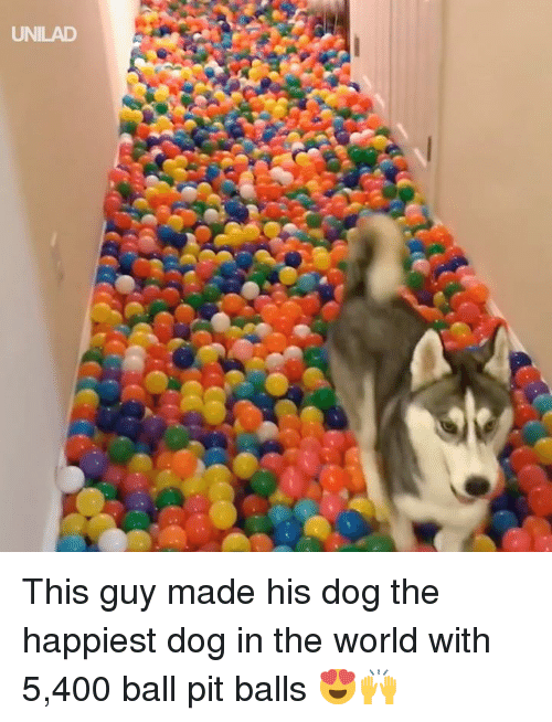 Dank, World, and 🤖: UNILAD This guy made his dog the happiest dog in the world with 5,400 ball pit balls 😍🙌