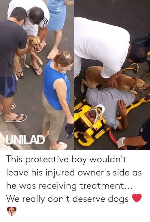 Dank, Dogs, and Boy: UNILAD This protective boy wouldn't leave his injured owner's side as he was receiving treatment... We really don't deserve dogs ❤️️🐶