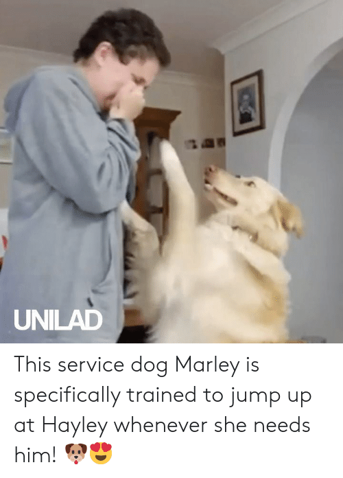 Dank, 🤖, and Dog: UNILAD This service dog Marley is specifically trained to jump up at Hayley whenever she needs him! 🐶😍