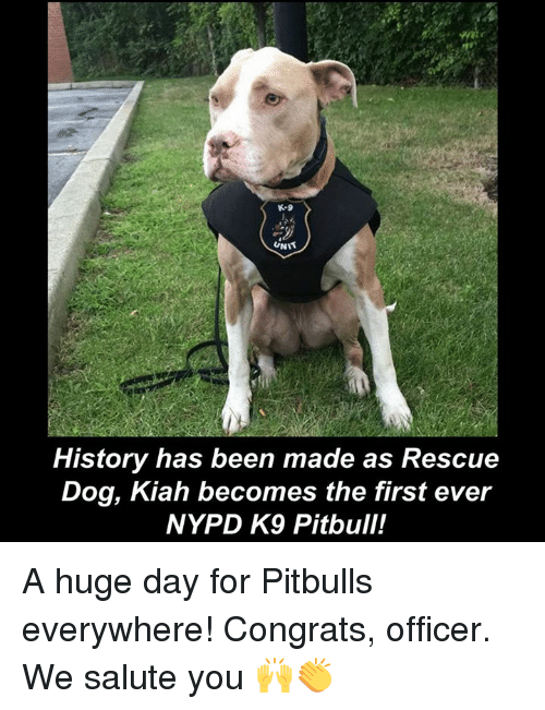 Rescue dog makes history as first ever pit bull to