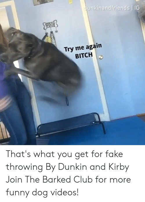 Bitch, Club, and Dank: unkinandfriends IG  Try me again  BITCH That's what you get for fake throwing By Dunkin and Kirby  Join The Barked Club for more funny dog videos!