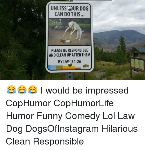 unlessaur dog can do this please be responsible and clean 15041813 ✅ 25 best memes about hilarious clean hilarious clean memes