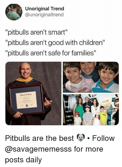 "Children, Memes, and Best: Unoriginal Trend  @unoriginaltrend  ""pitbulls aren't smart""  ""pitbulls aren't good with children""  ""pitbulls aren't safe for families  Beral Celleg  epie Pitbulls are the best 🐶 • Follow @savagememesss for more posts daily"