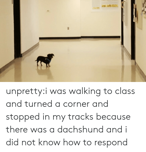 Target, Tumblr, and Blog: unpretty:i was walking to class and turned a corner and stopped in my tracks because there was a dachshund and i did not know how to respond