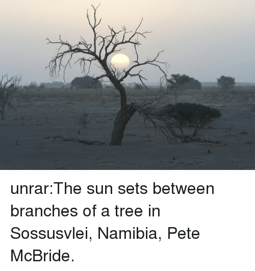 Tumblr, Blog, and Http: unrar:The sun sets between branches of a tree in Sossusvlei, Namibia, Pete McBride.