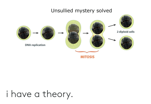 Unsullied Mystery Solved 2 Diploid Cells DNA Replication