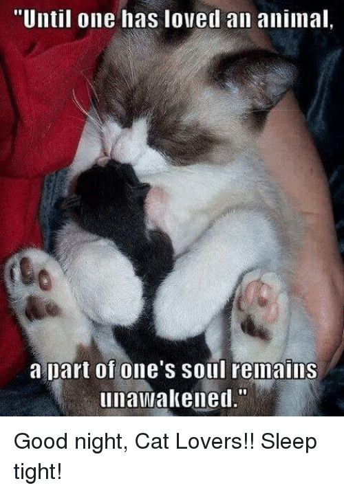 until one has loved an animal a part of ones 21690906 ✅ 25 best memes about good night cat good night cat memes,Cat Lover Meme