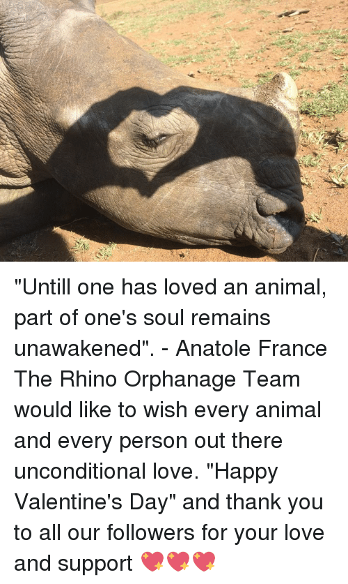 """Love, Memes, and Valentine's Day: """"Untill one has loved an animal, part of one's soul remains unawakened"""". - Anatole France  The Rhino Orphanage Team would like to wish every animal and every person out there unconditional love.  """"Happy Valentine's Day"""" and thank you to all our followers for your love and support 💖💖💖"""
