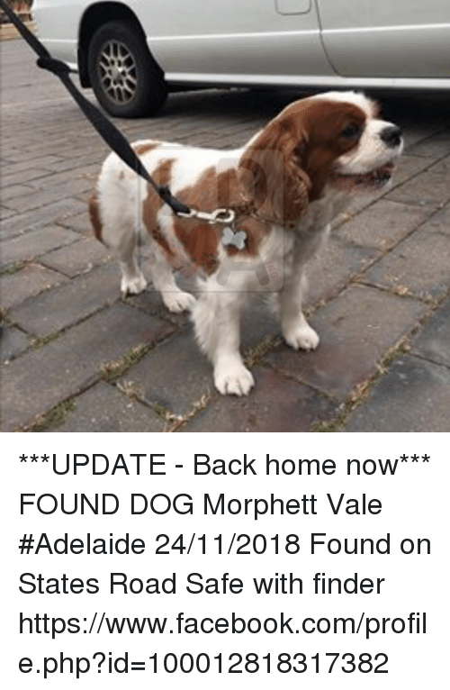 Facebook, Memes, and facebook.com: ***UPDATE - Back home now***  FOUND DOG Morphett Vale #Adelaide 24/11/2018 Found on States Road Safe with finder https://www.facebook.com/profile.php?id=100012818317382