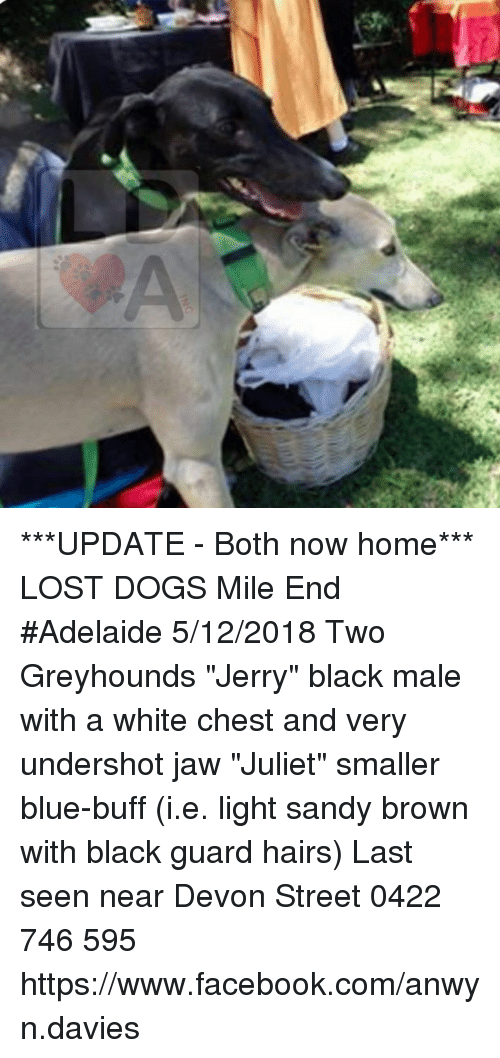 Update Both Now Home Lost Dogs Mile End Adelaide 5122018 Two