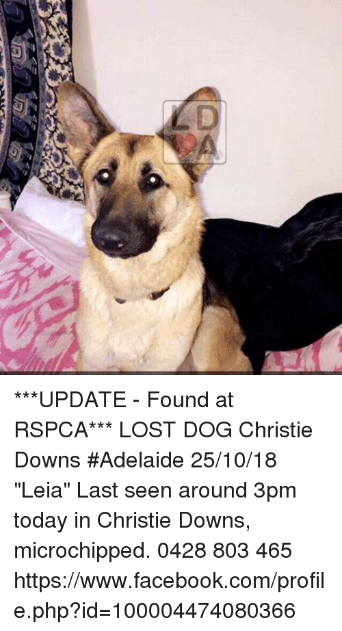 UPDATE - Found at RSPCA*** LOST DOG Christie Downs #Adelaide