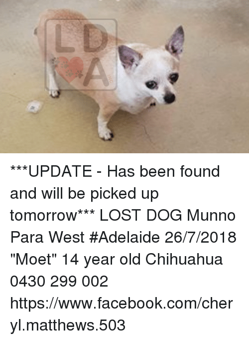 Chihuahua Facebook And Memes Update Has Been Found