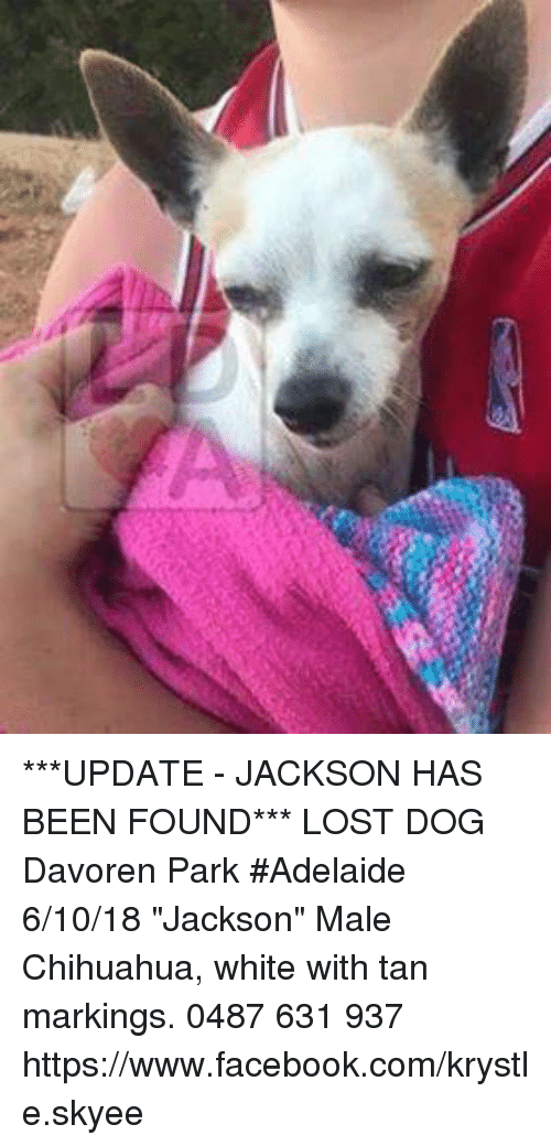Chihuahua Facebook And Memes Update Jackson Has Been Found