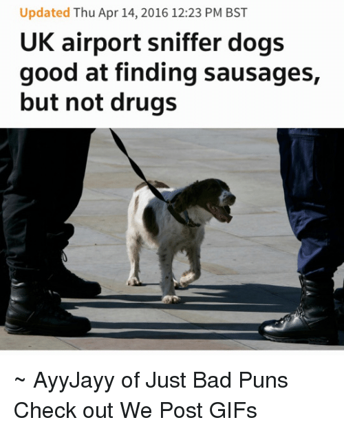 Bad, Dogs, and Drugs: Updated Thu Apr 14, 2016 12:23 PM BST  UK airport sniffer dogs  good at finding sausages,  but not drugs ~ AyyJayy of Just Bad Puns  Check out We Post GIFs