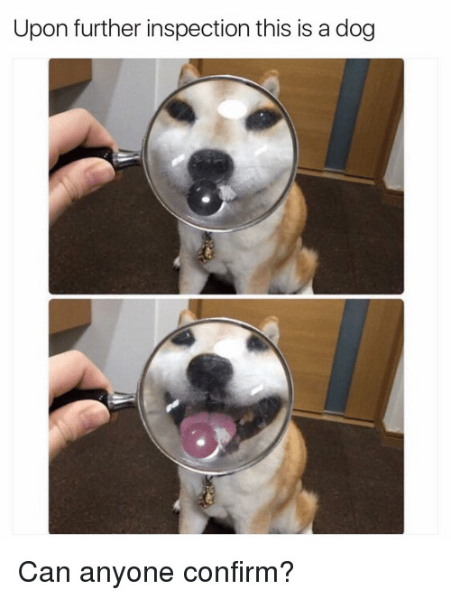 Funny, Further, and Inspect: Upon further inspection this is a dog Can anyone confirm?