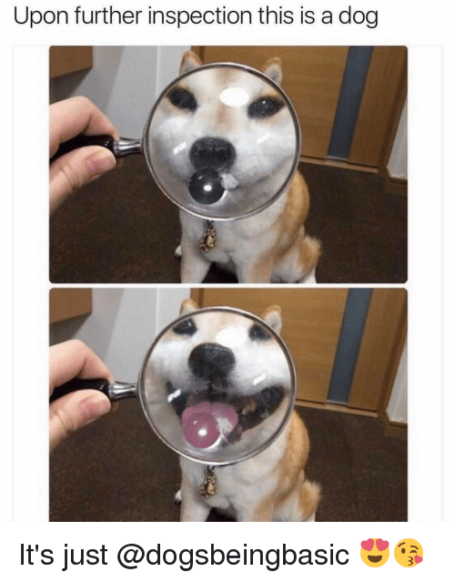 Memes, 🤖, and Dog: Upon further inspection this is a dog It's just @dogsbeingbasic 😍😘