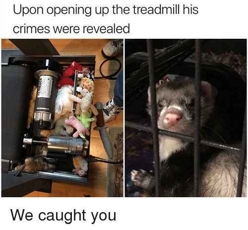Treadmill, You, and Were: Upon opening up the treadmill his  crimes were revealed We caught you