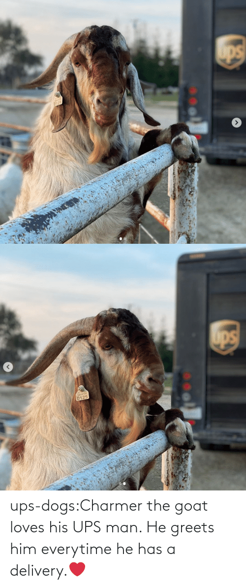 Dogs, Target, and Tumblr: ups-dogs:Charmer the goat loves his UPS man. He greets him everytime he has a delivery.❤️