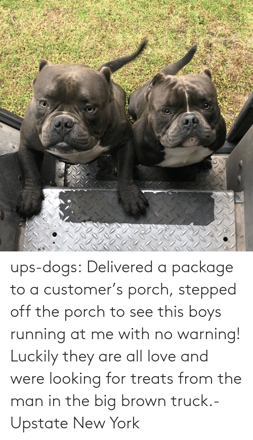 Dogs, Love, and New York: ups-dogs:  Delivered a package to a customer's porch, stepped off the porch to see this boys running at me with no warning! Luckily they are all love and were looking for treats from the man in the big brown truck.- Upstate New York