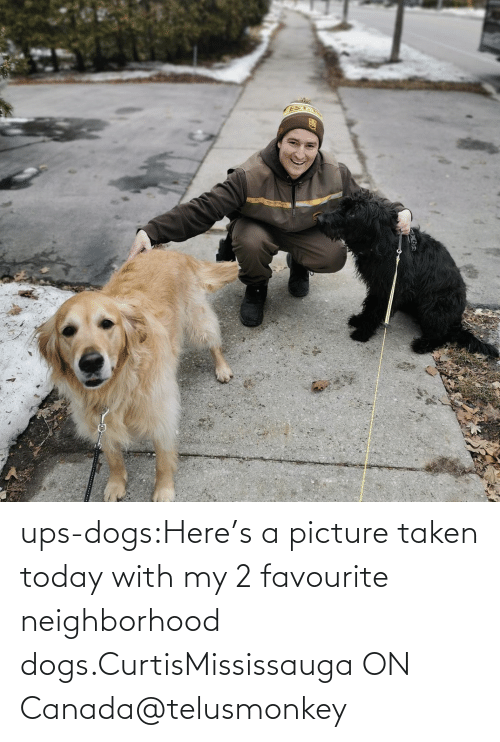 Dogs, Instagram, and Taken: ups-dogs:Here's a picture taken today with my 2 favourite neighborhood dogs.CurtisMississauga ON Canada@telusmonkey