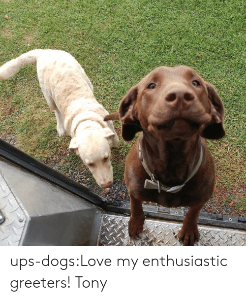 Dogs, Love, and Target: ups-dogs:Love my enthusiastic greeters! Tony